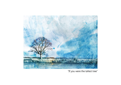 Pathhead Blue Tree